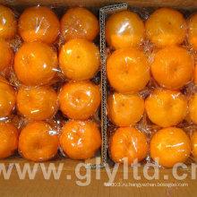 Новый урожай Высокое качество мандаринского апельсина