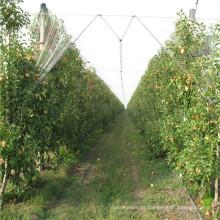Proteção das plantas anti rede da saraiva / malha da prova inseto da estufa / produtos plásticos agrícolas preço da rede da Anti-Abelha