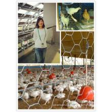 Fil de fabrication de fil de PVC enduit et galvanisé enduit pour le fil de poulet