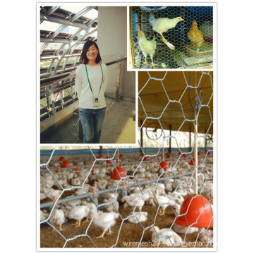 Tela de alambre recubierta de PVC y galvanizada para alambre de pollo