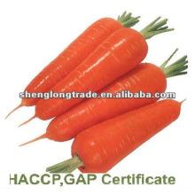 2012 nova safra chinesa fresca cenoura vermelha