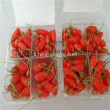 Ningxia Organic goji baies superfruit wolfberry
