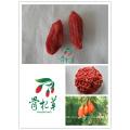 2016 новый урожай сертифицированных органических ягоды годжи 350 зерен / 50г