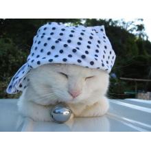 Bandera blanca linda hecha a medida del gato del perro de animal doméstico del triángulo del algodón del 100 por ciento