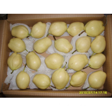 Early Su Pear/Sweet Chinese Fruits