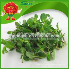 2015 Hotsale produto especial folhas de hortelã