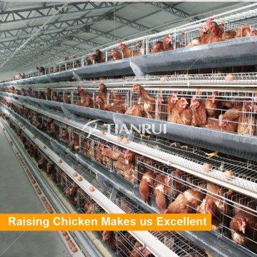 Fábrica Um tipo de gaiola de frango de camada para Bangladesh