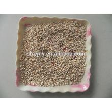 Espiga de milho para cogumelo / espiga de milho