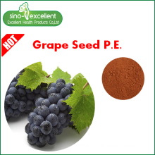 High Quality for Green Tea P.e. Real Grape Seed Extract fine powder export to Guyana Manufacturers