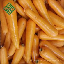 fabricant de carottes usine de porcelaine de carotte fraîche