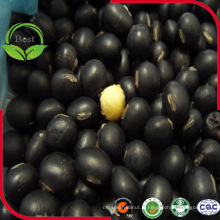 Fournir le haricot noir avec le grain jaune de soja noir