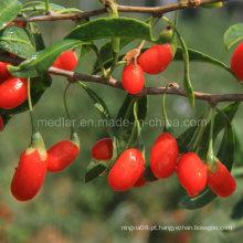 Cuidados de saúde nativos Wolfberry