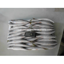 Whole Round Frozen Fish Pacific Mackerel for Bait