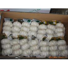 Exportar Nova Colheita Alho Branco Puro Chinês