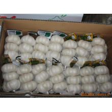 Экспорт Нового Урожая Китайский Чисто Белый Чеснок