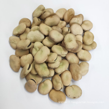 Health On Sale Chinese Qinghai Broad Beans/Fava Beans