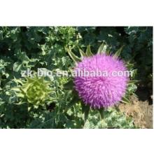 Hot Sale Silybum Marianum Seed Powder