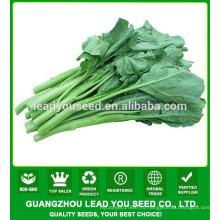 NKL01 Suijiao хорошее качество семян капусты семена kailan,китайская брокколи