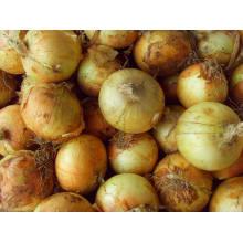4-6cm cebolla amarilla