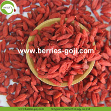 Tog Grade Factory Supply Gedroogde Ningxia Lycium
