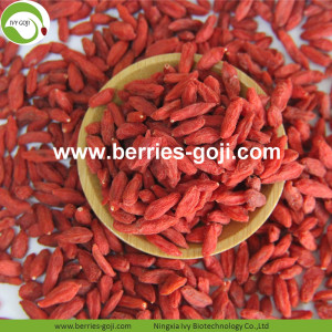Tog Grade Factory Supply secado Ningxia Lycium