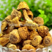 100% Natural plant extract Agaricus Blazei Beta 1,6/1,3 D glucan 30%,40%,50%
