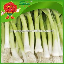 2015 HOTsale garlic sprouts garlic supplement frozen vegetables