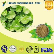 Well-being and low pesticide Gotu Kola Extract Powder /Centella asiatica (L.) Urban 10% Asiaticoside