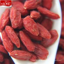 Nuevo distribuidor de llegada variedad goji berry