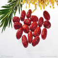 chinese wholesale specialty sweet red dates