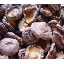 Ekologiskt extrakt Shiitake Svamp Utdrag