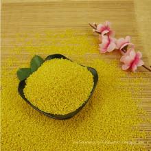 Millet collant de millet jaune gluant de la récolte 2016 pour le gâteau de riz