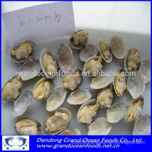 Frozen cooked baby clams