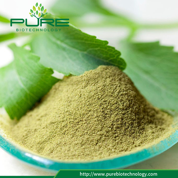 Hot Sale Pure Stevia Leaves Green Powder 2
