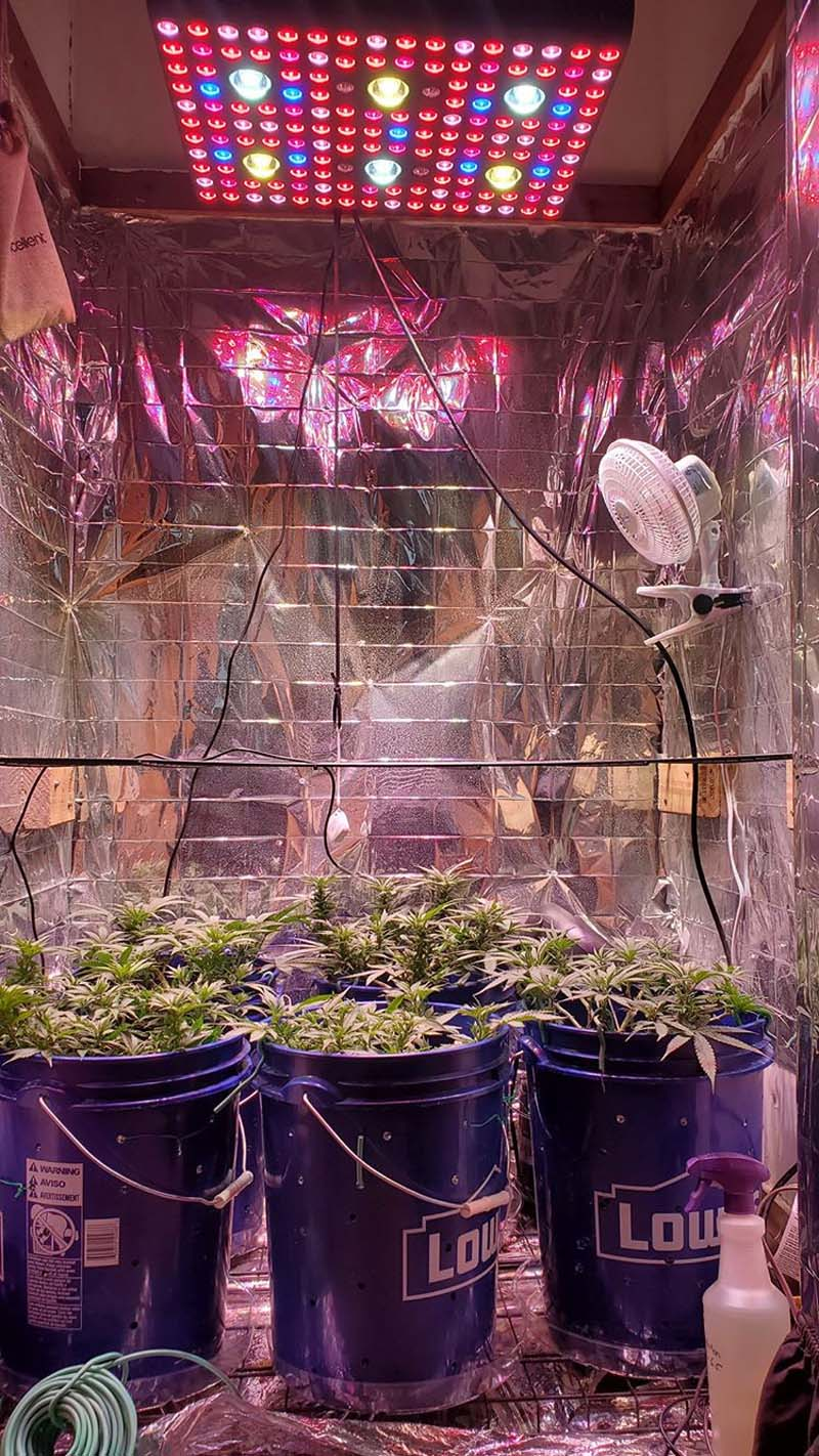 3000w led grow light