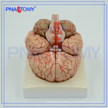 PNT-0611 Modèle anatomique avancé du cerveau, modèle cérébral 3D