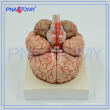 ПНТ-0611 Расширенный анатомическая модель мозга, модель мозга в 3D