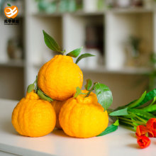 Popular Design for for Mandarin Orange Best fresh citrus perfume supply to Georgia Importers