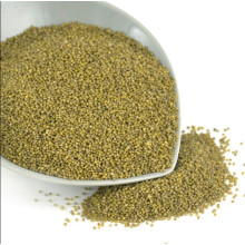Well selected Green millet in husk for bird