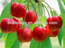 Sells Acerola Extract acerola cherry extract powder