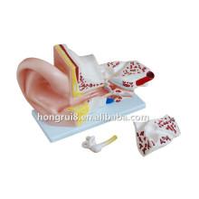 Modelo de oído para la formación médica
