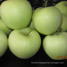 Export Standard Chinese Fresh Golden Apple
