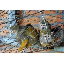Petites cages de chat et filet de maille d'acier inoxydable de maille de clôture