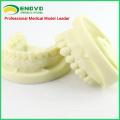 DENTAL05 (12564) Modelo de mandíbula de preparación de cavidades para el entrenamiento dental de estudiantes