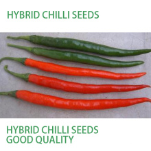 HP18 Tuijin F1 hybride piment / graines de piment dans les graines de légumes