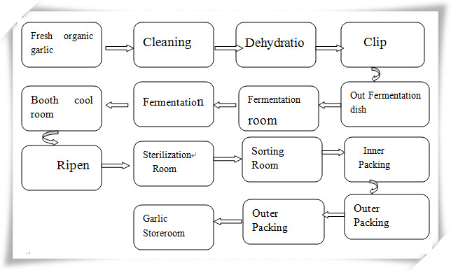 black garlic fermenting process