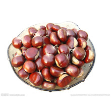 Good Price Fresh Chestnut for Sale From China