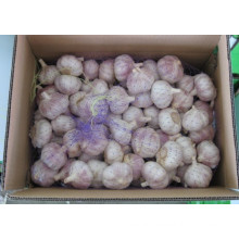 New Crop Normal White Garlic (5.0cm and up)