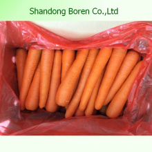 2015 New Crop of Fresh Red Carrot