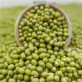 La máquina bien limpiada Green Mung Beans 2012 cosecha